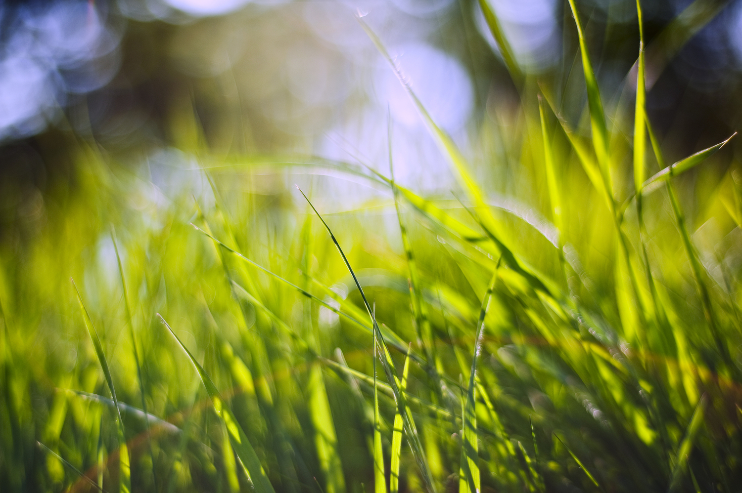 Background of lush green grass blades with defocussed bokeh lights background
